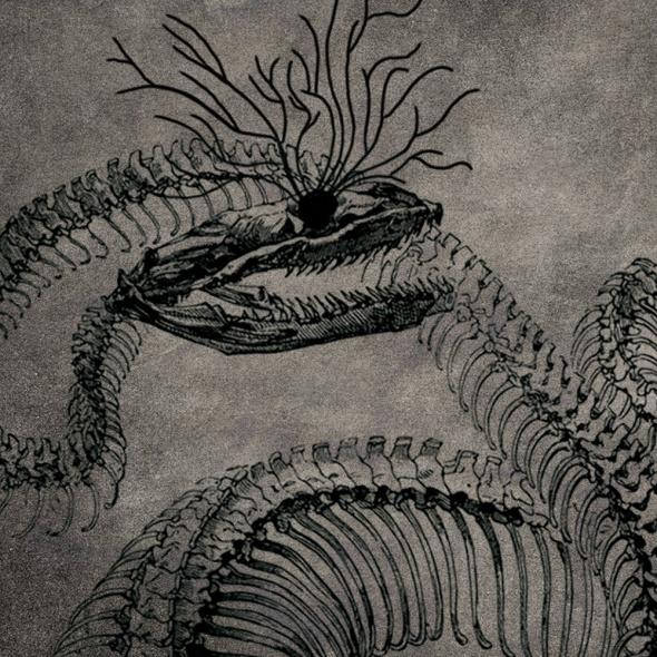 Animalfantasma - La noche tiene hambre